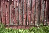 Weathered Red Barn Wall Background. Peeling Paint On Weathered Wooden Red Barn Wall With Wildflowers poster