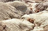 picture of paleozoic  - desert badlands - JPG
