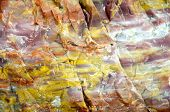 stock photo of paleozoic  - colorful petrified wood detail - JPG