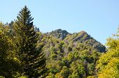 Newfound Gap Mountain Pass