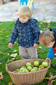image of crip  - Two little siblings in autumn garden with basket full of apples
