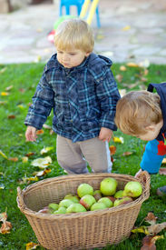stock photo of crip  - Two little siblings in autumn garden with basket full of apples  - JPG