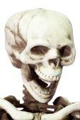 stock photo of head femur  - Halloween skeleton on white background - JPG