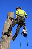 picture of man chainsaw  - Tree surgeon lumberjack with a chainsaw in a harness - JPG