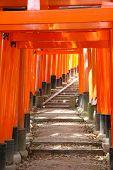 picture of inari  - Fushimi Inari Taisha shrine in Kyoto prefecture of Japan - JPG