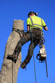 foto of cutting trees  - Tree surgeon lumberjack with a chainsaw in a harness - JPG