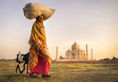 picture of land development  - Indian woman carrying on head and goats near the taj mahal - JPG