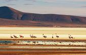 foto of flamingo  - flamingo in Bolivia - JPG