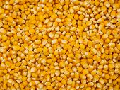 stock photo of maize  - Top view at the heap of raw maize seeds - JPG