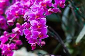 foto of orquidea  - orchid flower with buds background  - JPG