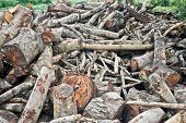 picture of slash  - a big pile of trees cut down by human - JPG