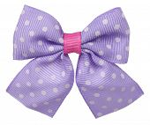 stock photo of bow tie hair  - Dotted hair bow tie lilac with white spots - JPG