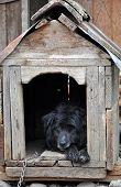 stock photo of dog-house  - Black Dog resting in the dog house - JPG