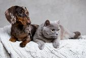 puppy and kitten; Group of cat and dog poster