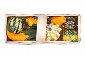 foto of gleaning  - beautiful decorative pumpkins  - JPG