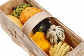 stock photo of gleaning  - beautiful decorative pumpkins  - JPG