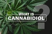 Cannabidiol Cbd Formula, Cultivation Cannabis, Marijuana Vegetation Plants, Marijuana Leaves, Growin poster
