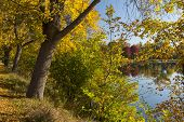 stock photo of winona  - Autumn colored trees and a reflective lake - JPG