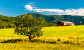 stock photo of appalachian  - Barn tree and view of the Appalachians in the Shenandoah Valley Virginia - JPG
