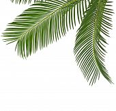 Corner Border of Palm leaves close up with copy space,  isolated on white background