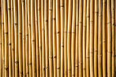 pic of bamboo  - Yellow bamboo fence texture for  background  - JPG