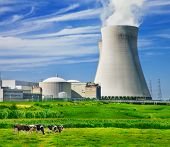 picture of peace-pipe  - Cows grazing close to a nuclear power station - JPG
