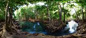 stock photo of pom-pom  - Mangrove trees in a peat swamp forest - JPG