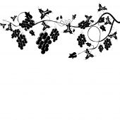 picture of grape-vine  - stylized black and white grapevine harvest background - JPG