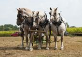 stock photo of horse plowing  - horse - JPG
