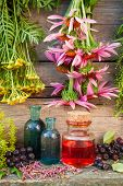 stock photo of tansy  - bunches of healing herbs on wooden wall and glass bottles herbal medicine - JPG