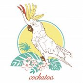 foto of palm cockatoo  - Vector illustration for printing on paper and fabric - JPG