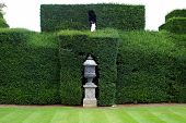 picture of plinth  - Decoration of sculptured urn on a plinth in a sculptured hedge.