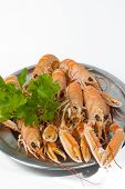 picture of norway lobster  - Tray of norway lobster on white background - JPG