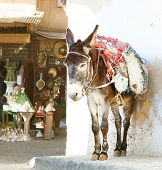 foto of horses ass  - Donkey  on the street of the medina in Fez - JPG