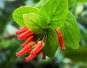 image of jungle flowers  - Red tropical flowers - JPG