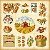 picture of harvest  - Vintage colorful apple harvest set - JPG