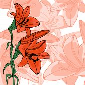 image of lilly  - Elegant illustration of lilly flowers - JPG