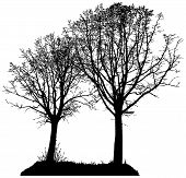 foto of linden-tree  - vector silhouette of two trees with piece of grass two lime trees isolated illustration - JPG