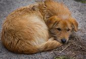stock photo of homeless  - Lonely homeless dog basking in the heating duct - JPG