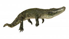 stock photo of alligator  - 3D digital render of an American alligator or Alligator mississippiensis isolated on white background - JPG