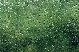 image of rainy season  - Rainy wet green eco seasonal summer natural background with water drops - JPG