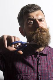 pic of long beard  - Portrait of young unshaven man in violet checkered shirt cutting long beard and handlebar moustache with scissors in hand standing isolated on white background vertical picture - JPG