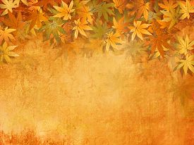 stock photo of yellow  - Fall leaves background in yellow orange autumn colors  - JPG