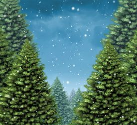 foto of winter trees  - Winter tree background concept as a group of Christmas trees with snow flakes falling from a cold blue sky as a seasonal holiday symbol with blank copy space for a greeting card or a festive New Year season announcement - JPG