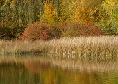 foto of bull rushes  - taken at a country park in october  - JPG