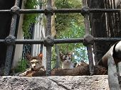 pic of mosk  - cats resting in a mosk backyard window in istanbul - JPG