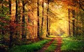 Autumn Forest Scenery With Rays Of Warm Light poster