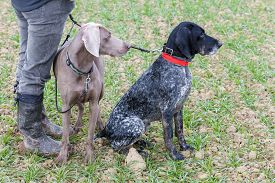 foto of hunter  - hunting dogs with hunter - JPG
