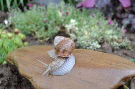 stock photo of garden snail  - snail home garden in the spring zvolen 23 - JPG