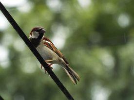 image of chickadee  - A chickadee - JPG